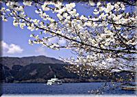 箱根・芦ノ湖と桜