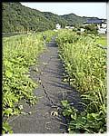 久慈川堤防