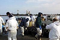 日立港での重油回収作業を行うボランティアメンバー
