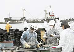 日立港で重油回収作業を行う公明党のボランティアメンバー