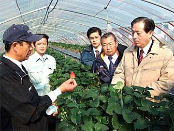 太田代表が鉾田市のイチゴ農家を視察