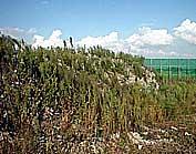 不法投棄物の現場調査